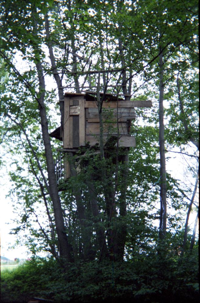 Original Photo Of The Treehouse